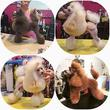 Dogdíva Kutyakozmetika
