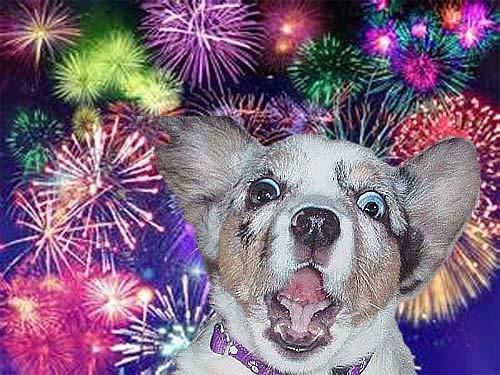 fotó: lovingdogsdaily.com