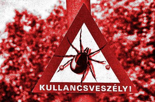 (forrás: Magyar Kullancsszövetség)